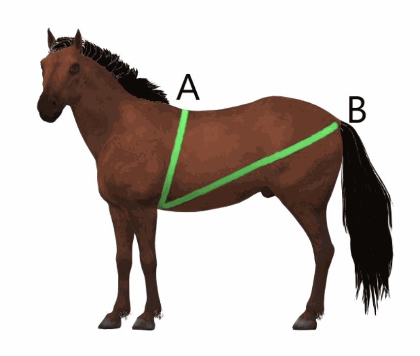 häst lös i magen hösilage